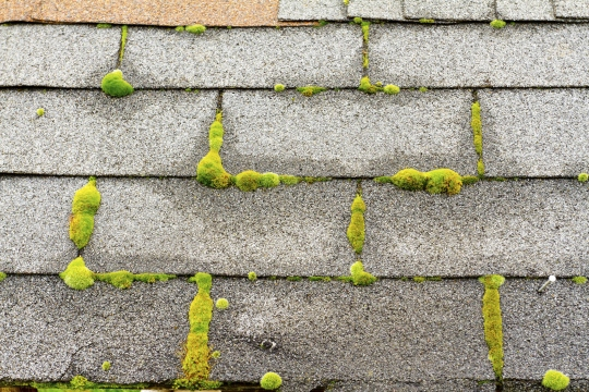 roof shingles with moss.jpg