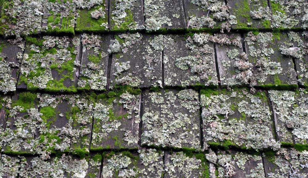 Roof Top Moss Removal 1000x5781 1